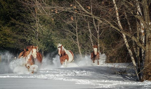 Western Horseman Calendar 2019  December