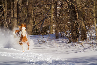 Western Horseman Calendar 2019  February