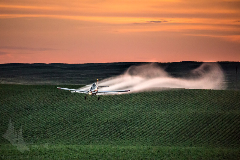 Sunrise Spraying