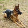 Bianka (aka Sam, aka Oz) at 13 months old.