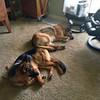 Bianka (Oz) von Orumhaus and Millie von Orumhaus resting after an exciting day.