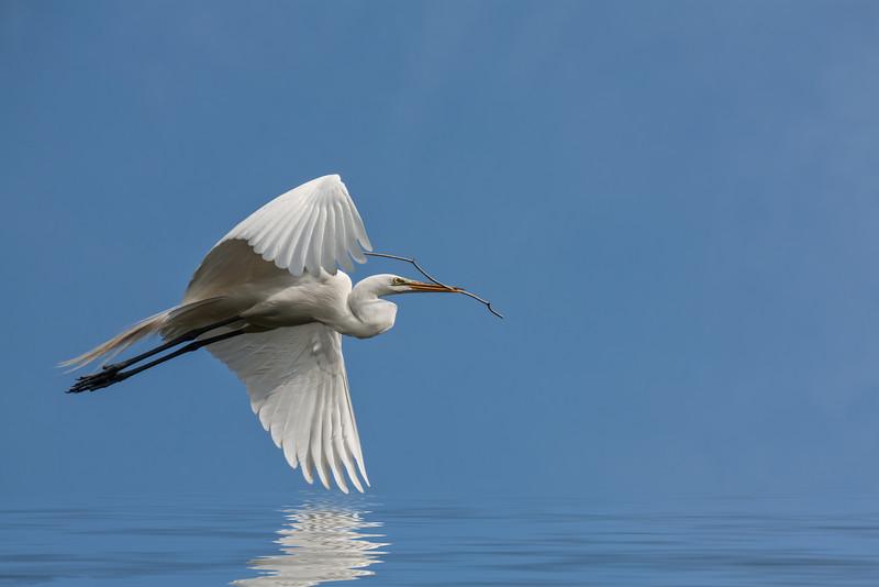Serenity Egret