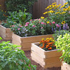 Prefabricated Cedar raised beds