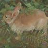 Terry's Bunny 8x10