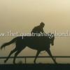 Morning Gallop I