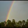 Ponderosa Pine Rainbow