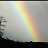 Dead Ponderosa Rainbow