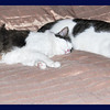 Zandi and Rambo Sleeping BH (Before Hutch)