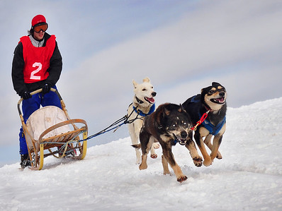 6th Annual Cannington Dogsled Races '10