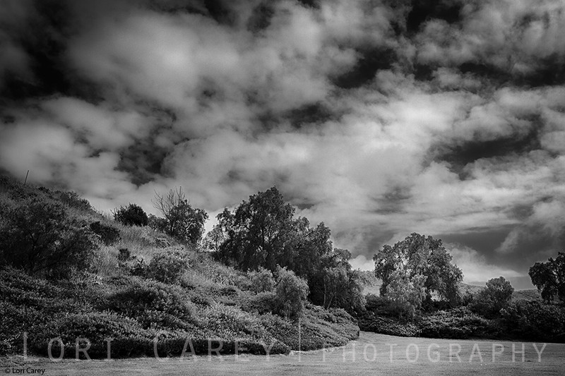 Pepper trees and clouds, southern California landscape
