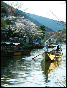 Arashiyama, Kyoto during cherry blossom season.