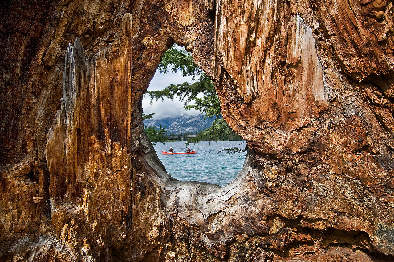 Looking through an opening in a large tree trunk in the Canadian Rockies,