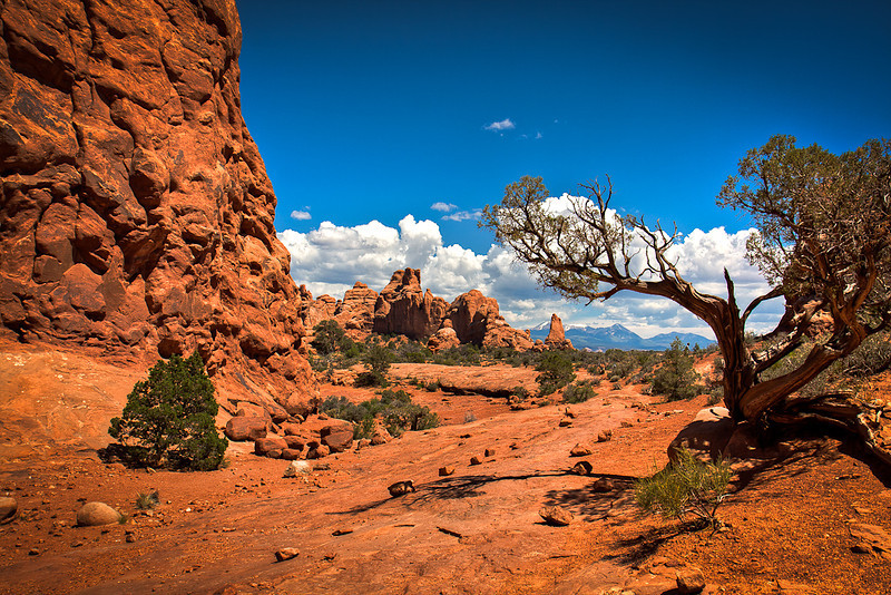 """Arches NP"""