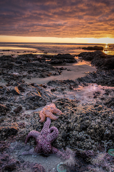 """Starfish Sunset"""