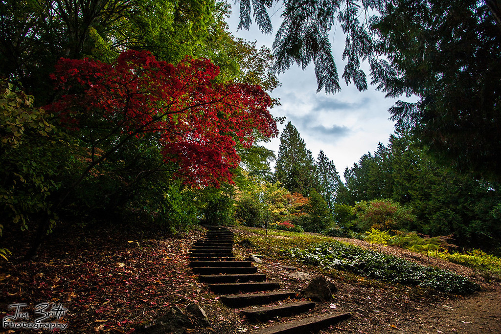 """The Path"" at the Washington Arboretum."