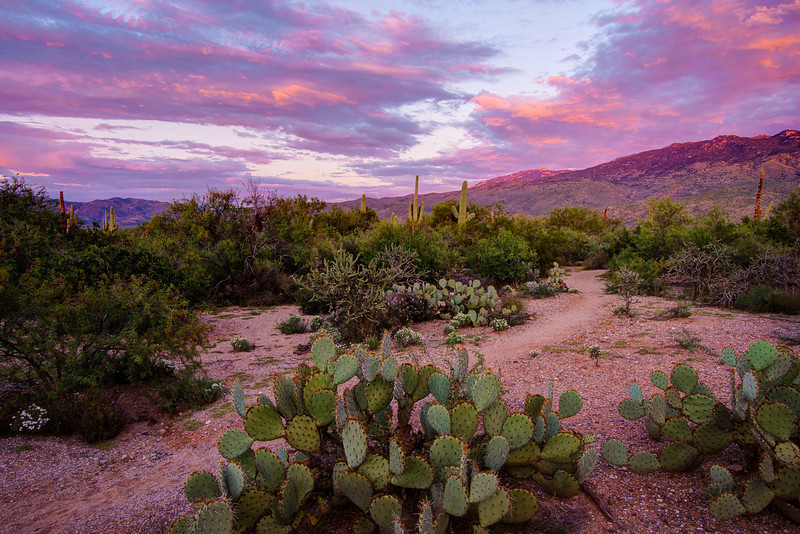 """Purple Sunset in the Sonoran Desert"""