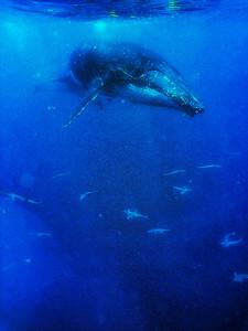 Underwater Queen