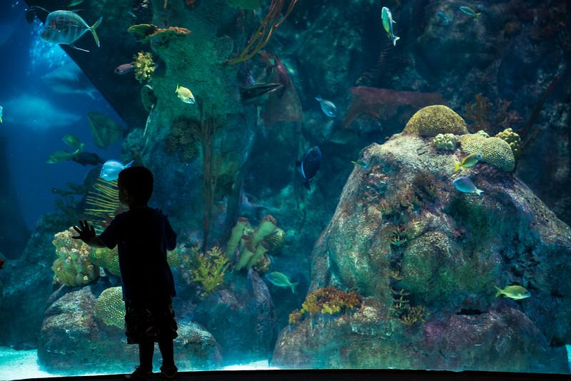 Fascinating fish