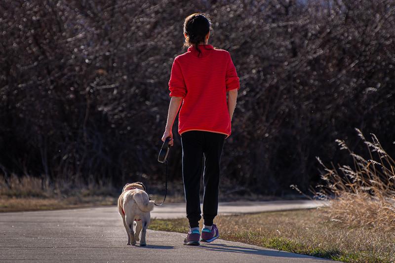 Morning pug walk