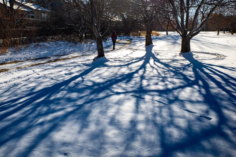 Trees casting shadows