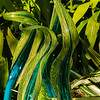 """""""Glasshouse Fiori""""  ( <a href=""""https://chihuly.nybg.info/view/glasshouse-fiori/8094e319-d87c-3e09-4315-74addd6f9cf4"""">https://chihuly.nybg.info/view/glasshouse-fiori/8094e319-d87c-3e09-4315-74addd6f9cf4</a>)"""