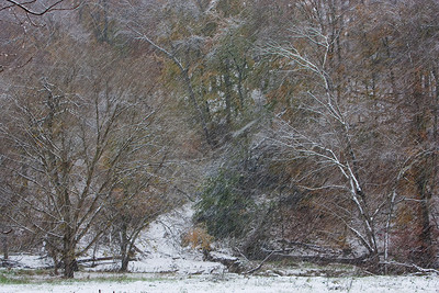 Early Snow on Little Bennett Creek