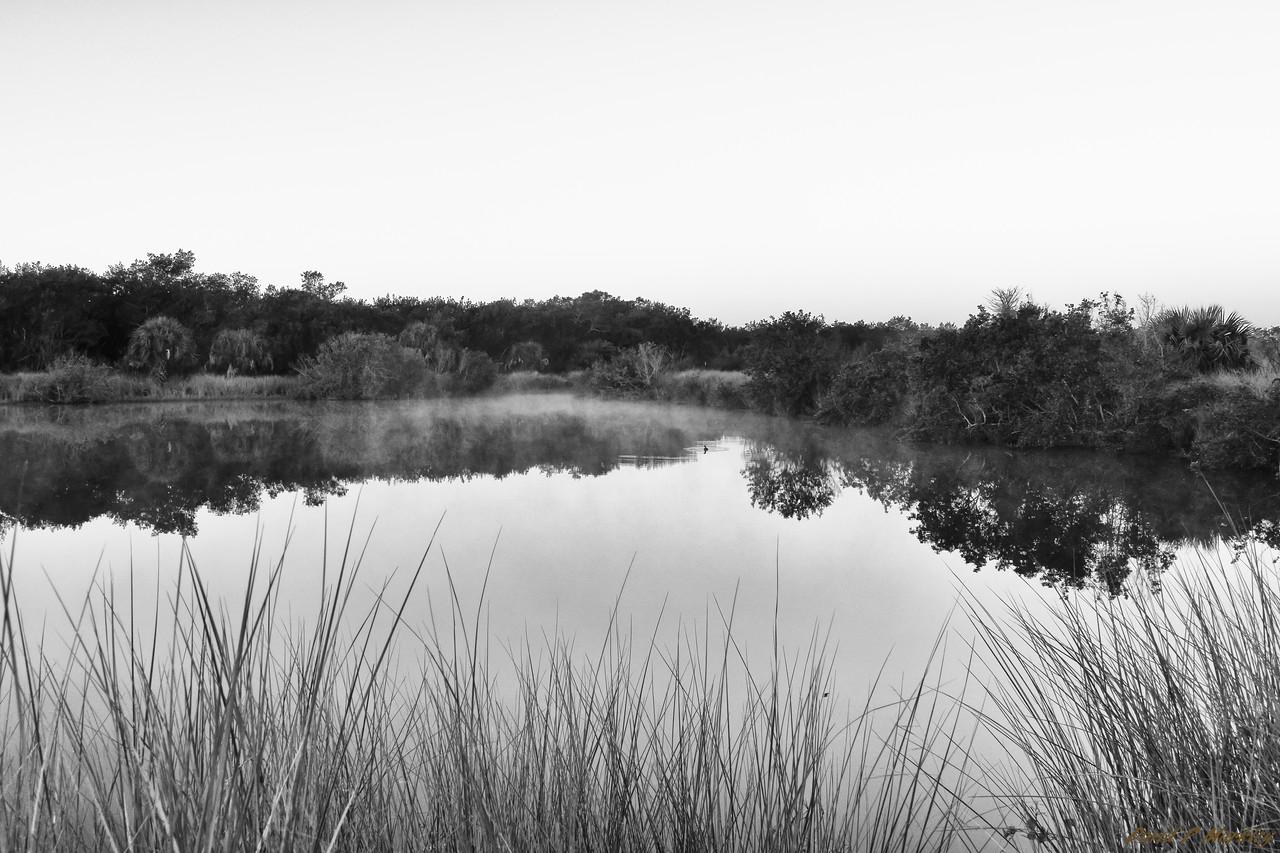 Alligator Pond