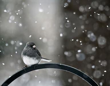 Snow Falling On Bird