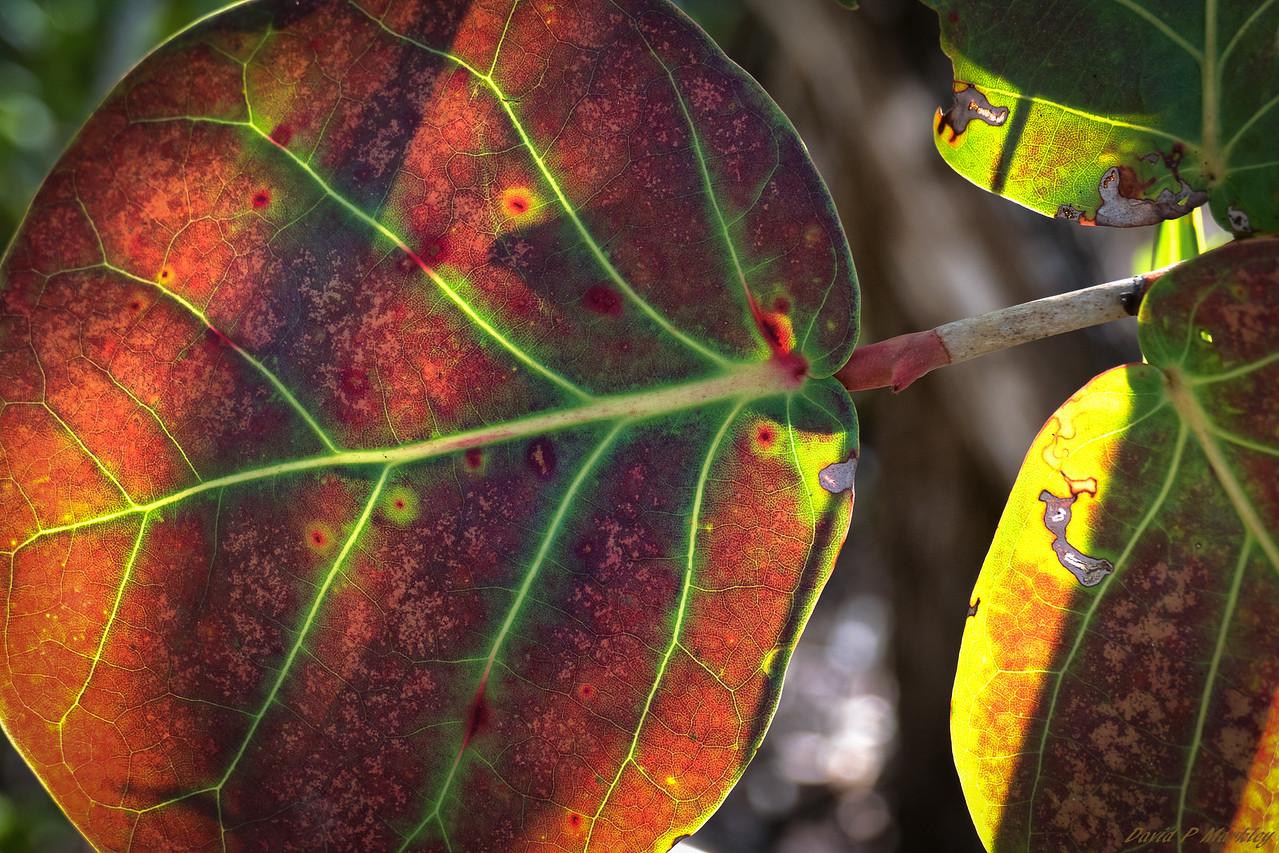 Spotty Leaves