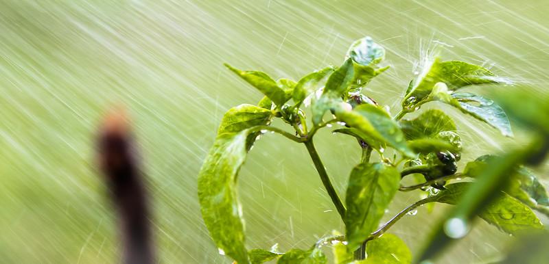 IMAGE: http://www.chrislehmanphotography.com/Portfolio/RecentFavorites/i-LQfLj5f/0/L/RainingPlantCrop-1-L.jpg