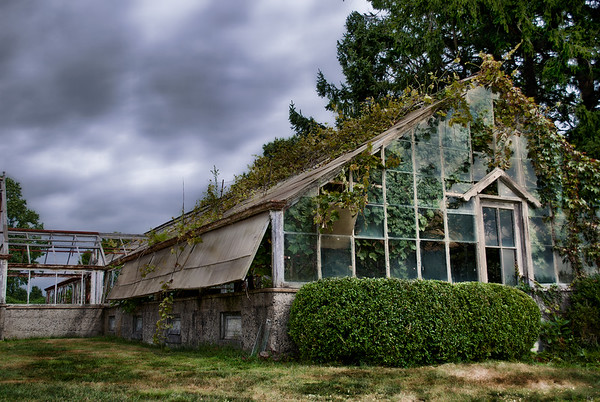 Old abandoned greenhouse covered in vines.  Harkness Park, CT.