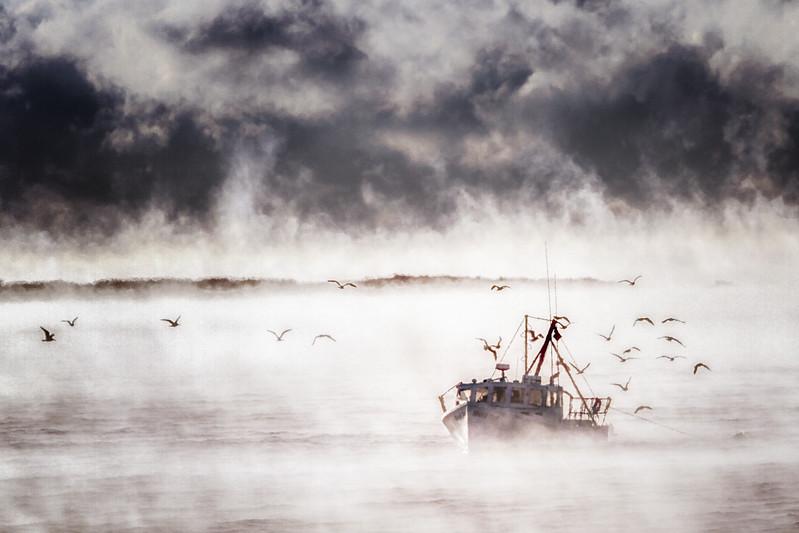 Sea Smoke 3 Fish Gallery