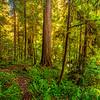Redwood Fern Path-NoCal_Jul242014_0294