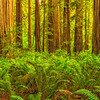 Stout Grove Fern Grotto-NoCal_Jul232014_0873