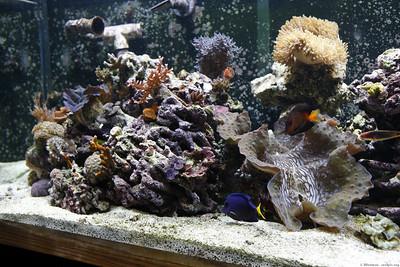 Reef Aquarium 2-10