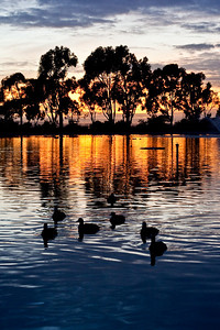 Duck Pond Sunset