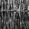 Fullersburg Forest Preserve © Copyright Ken Welsh