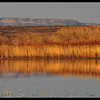 Reedy Wetlands Reflections