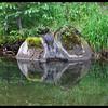 Mossy Creekside Rock Reflections