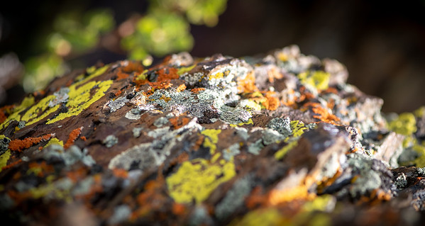 I'll Look to Lichen, If Looking Lichen Move
