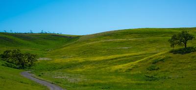 Emerald Pastures