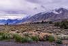 SIERRA MOUNTAIN BACKDROP 2