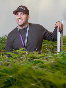 Reno Cannabis Marketing Photography