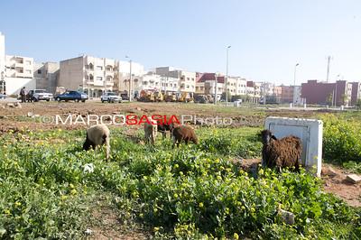 0021-Marocco-012