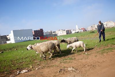 0016-Marocco-012