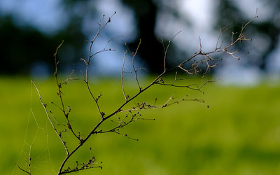 Lovely interplay between the twig, the grass and the sky