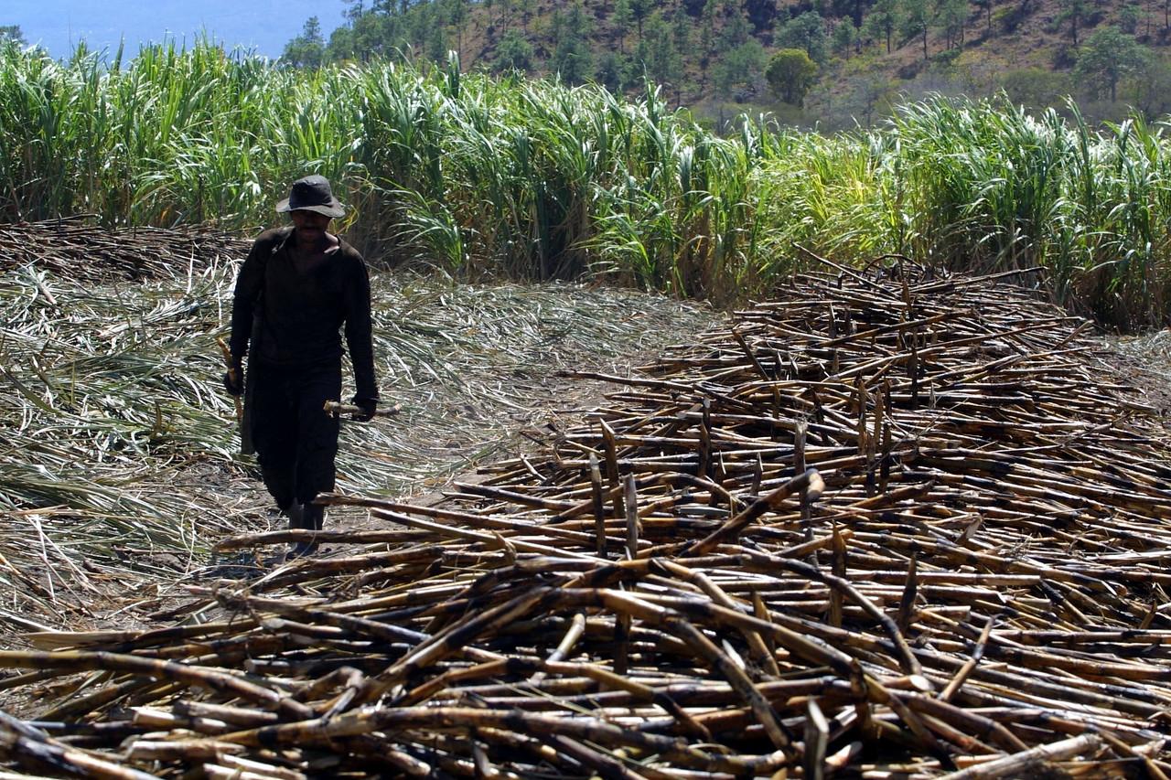 Sugarcane Harvest 2002 Honduras. REUTERS/ Adam Bernstein.