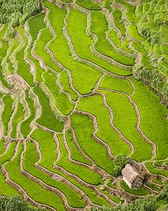 Yunnan tartomány - rizsterasz