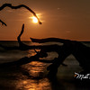 Driftwood Beach Moonrise-56