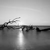 Driftwood Beach Moonrise-53-2
